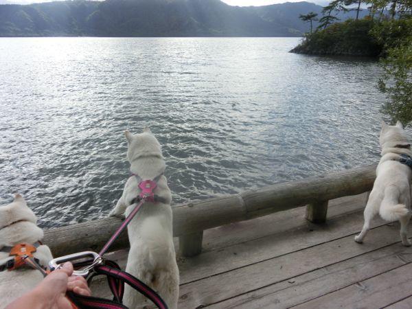 2016.9.10 十和田湖4