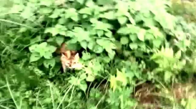 草叢の中のプラン