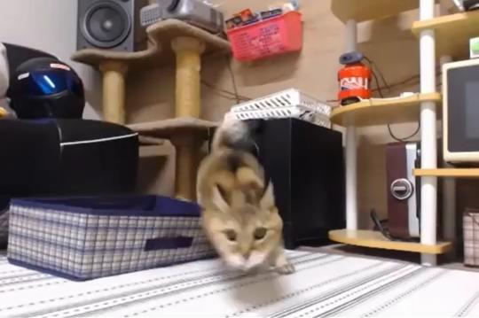 元気にジャンプ!