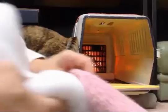 詰め物でホットカーペットの温度調節(低温火傷防止)