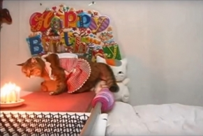 プランちゃん 20歳のお誕生日