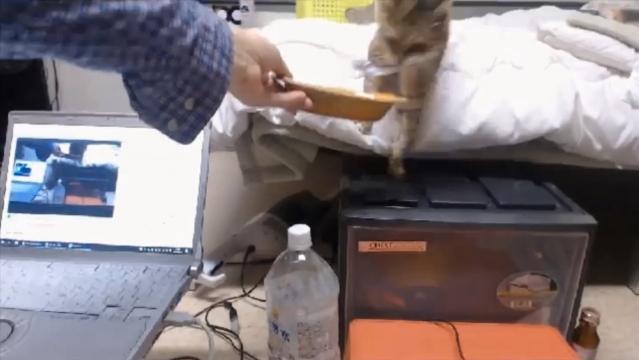お魚くわえたプランちゃん04 - 泥棒猫02