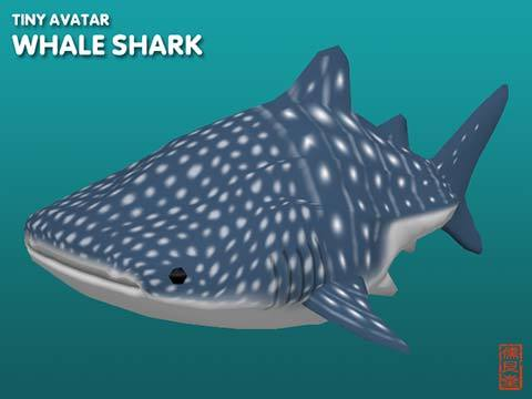 Pop_TinyWhaleShark_blog01.jpg