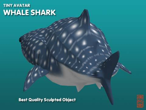 Pop_TinyWhaleShark_blog03.jpg