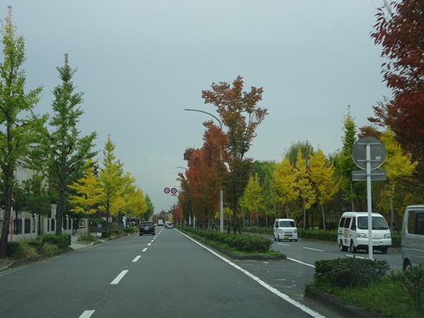 DSC01981.jpg