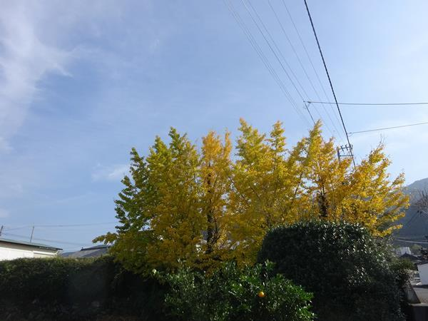 DSC02388.jpg