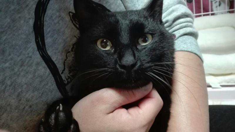 黒猫鈴ちゃん