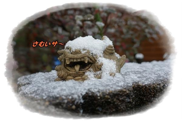 2016-11雪です