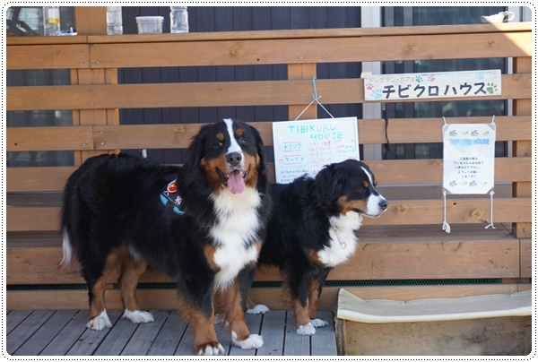 2016-12看板犬1