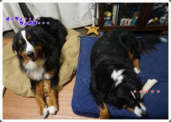 2017-1お留守番