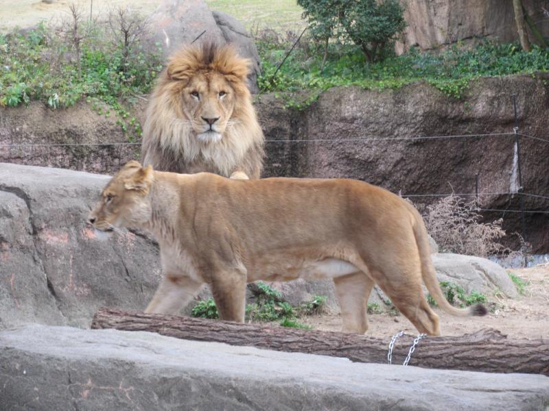 天王寺動物園7