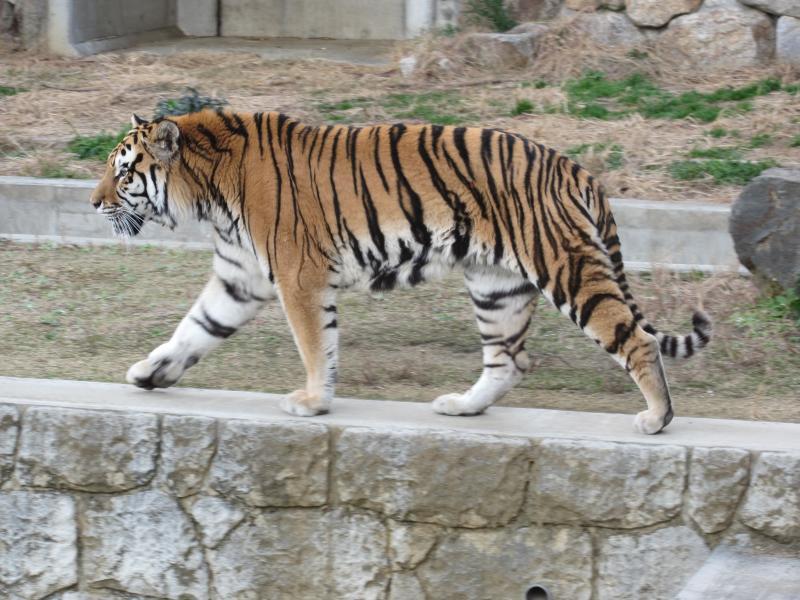 天王寺動物園6