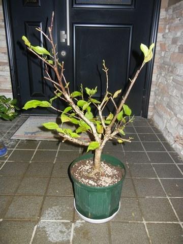 hibiscus161127.jpg