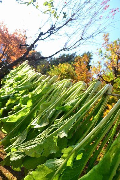 青空と紅葉と野沢菜30