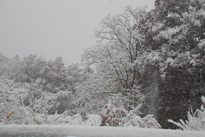 初雪161124
