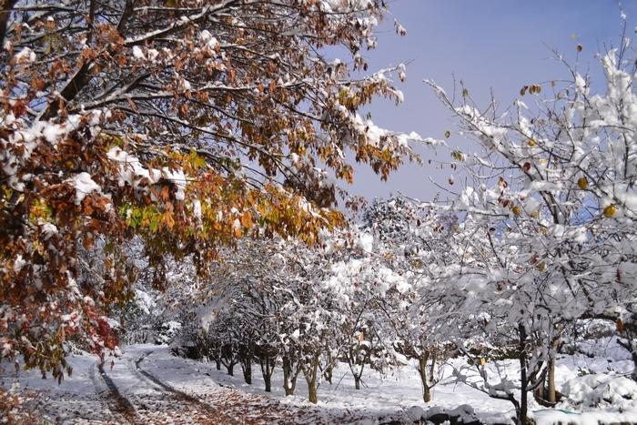 紅葉と雪景色5
