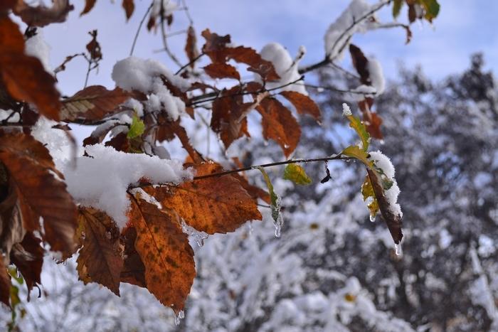 紅葉に雪19