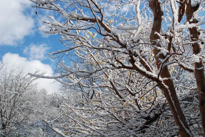 雪の止んだ朝49