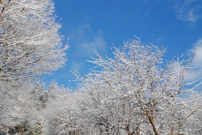 雪景色52