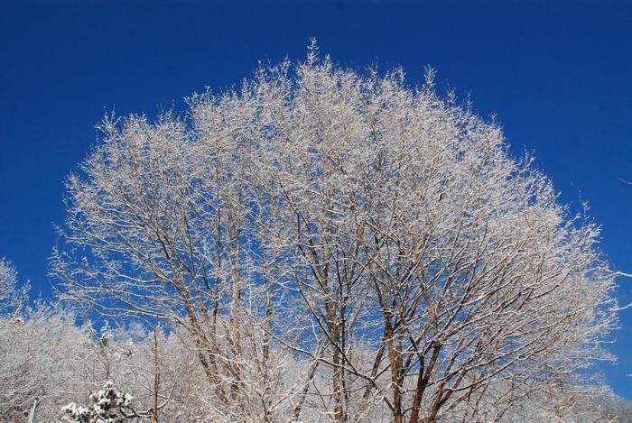 雪景色59