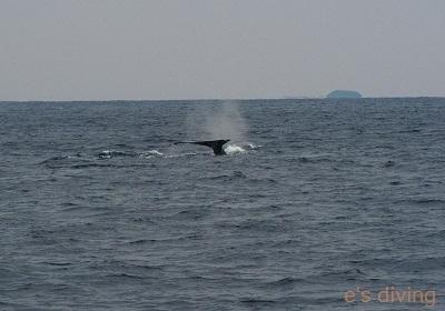 2017.1.22 初クジラblog