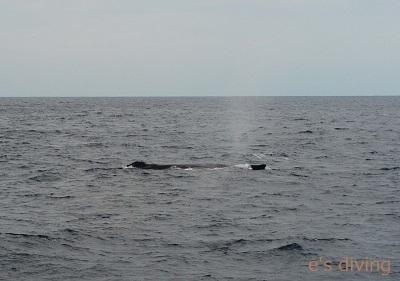 2017.1.21 初クジラ2blog
