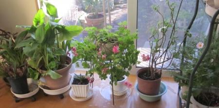 花のコーナー3