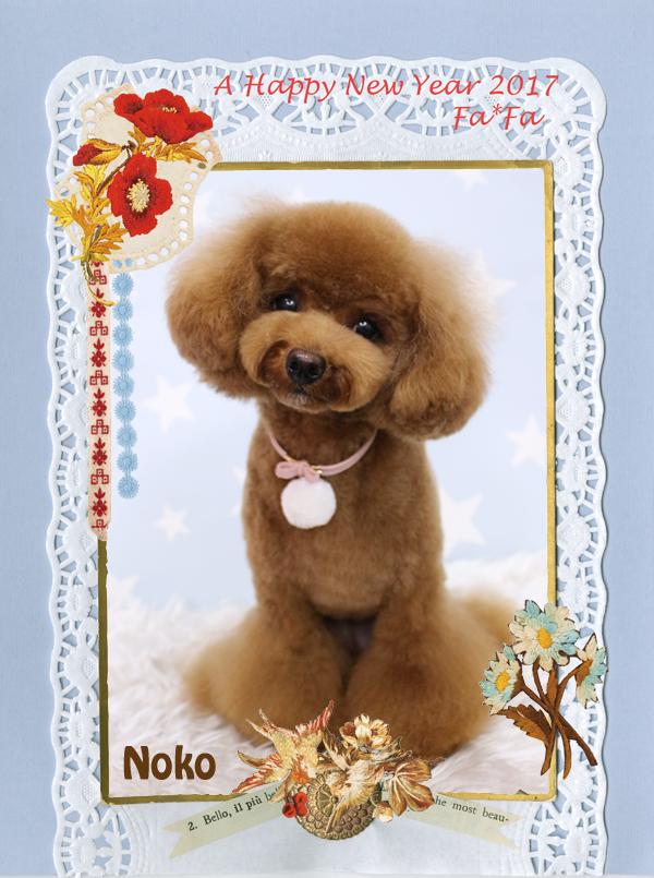 ノコちゃん1-1