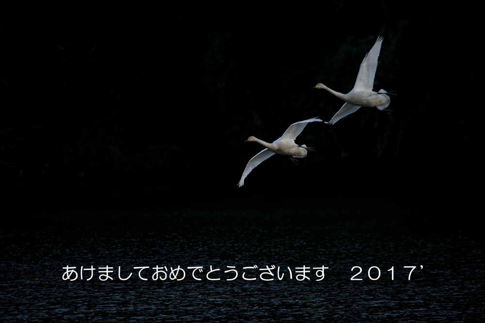 161231-akeome.jpg
