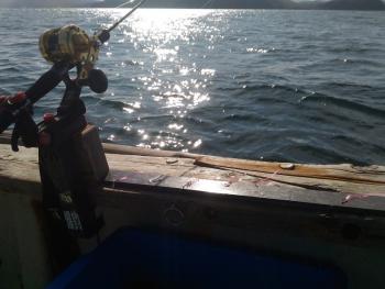 ビニール真鯛