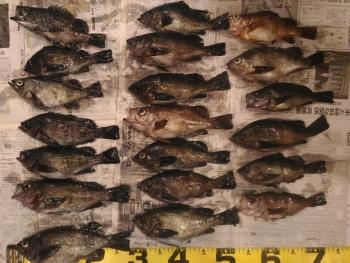 黒魚の部・・・