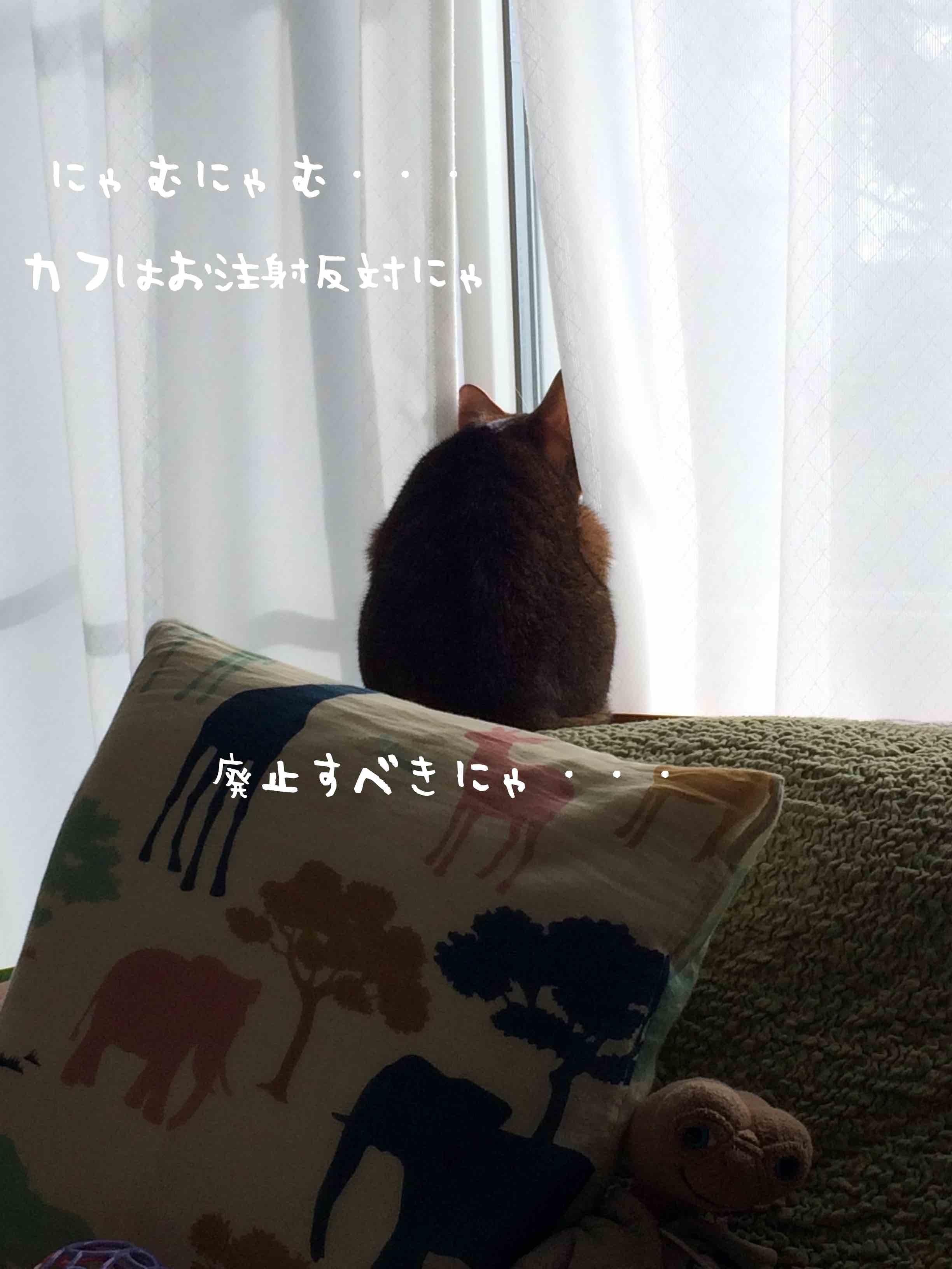IMG_0649 のコピー