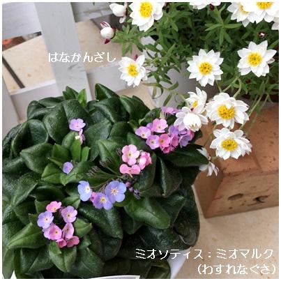 2017 1月 春の花