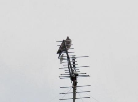 雀と鳩 008