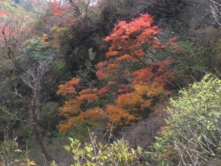 紅葉雲仙岳 232