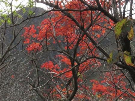 紅葉雲仙岳 380