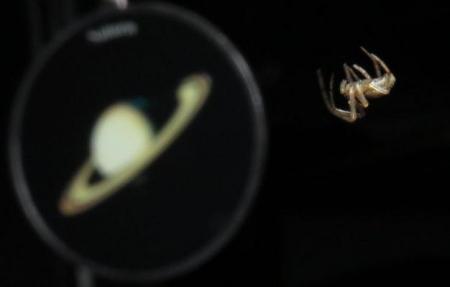 蜘蛛 018