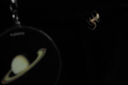 蜘蛛 014