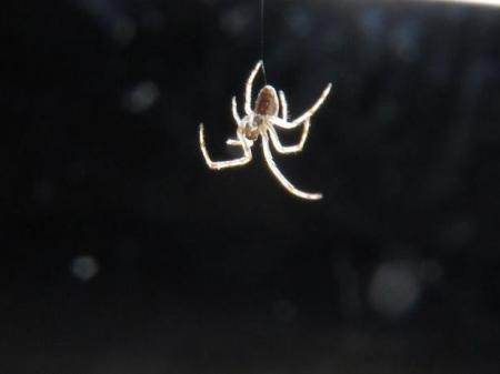 蜘蛛 023