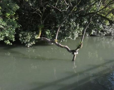 飛ぶ川下り 140