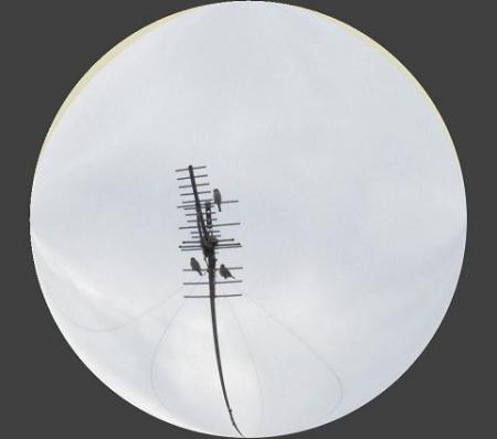 3羽の雀 001