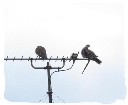 2羽のハト 006