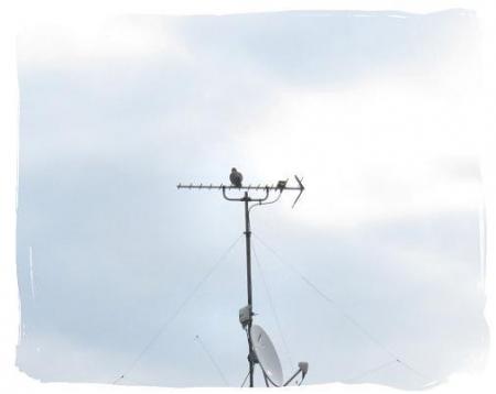 2羽のハト 025