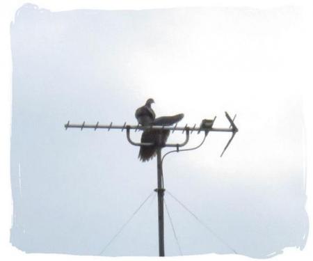 2羽のハト 024
