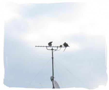 2羽のハト 023