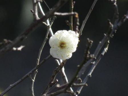 大沢ハマシギ・川下り待ちぼうけ 198