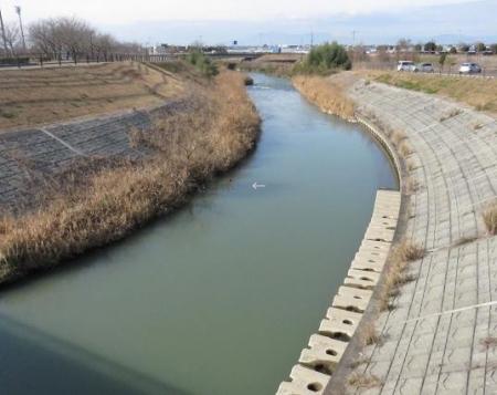 矢部川オオバンなど 148
