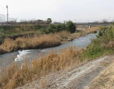 矢部川オオバンなど 053
