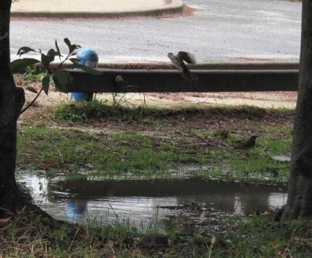 雨上がり 073
