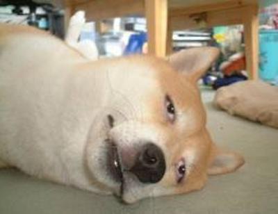 いつから「犬も逝った。」と錯覚していた?